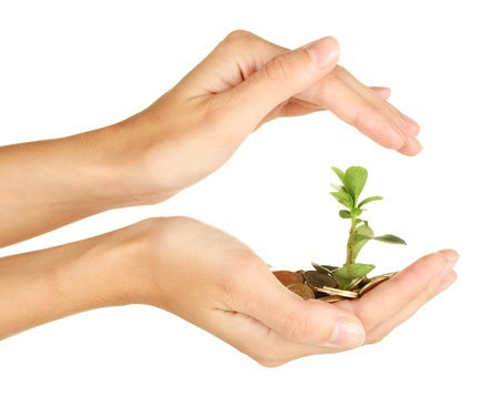 investment protection: womans hands are holding a money tree on white background close-up