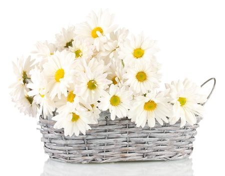 white daisy: daisies in  wicker basket isolated on white