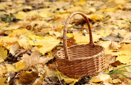 empty basket in garden on autumn leaves photo