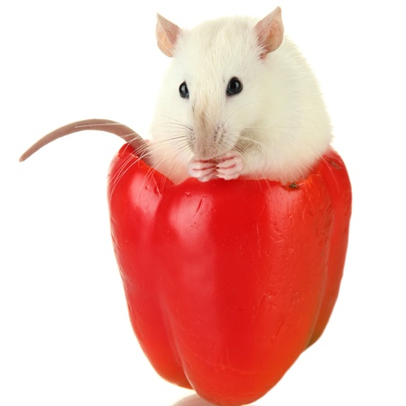 funny little rat in papper, isolated on white Stock Photo - 16620285