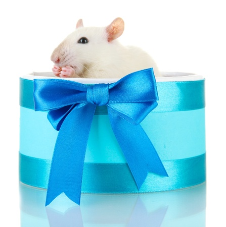 funny little rat in gift box, isolated on white Stock Photo - 16620160