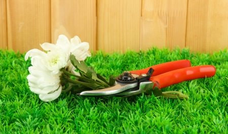 Secateurs with flower on grass on  fence background photo