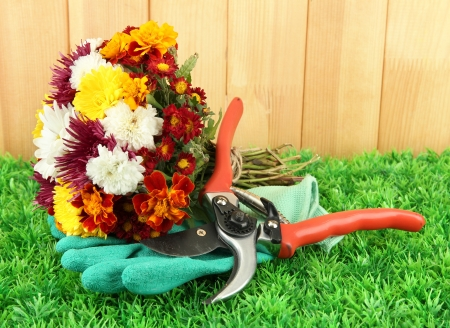 Secateurs with flowers on grass on fence background photo