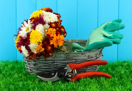 Secateurs with flowers in basket on wooden background Stock Photo - 16737807