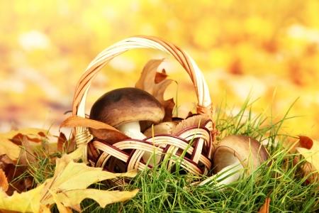 funghi: Funghi in cesto di vimini su erba su sfondo luminoso