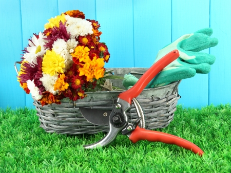 Secateurs with flowers in basket on wooden background photo