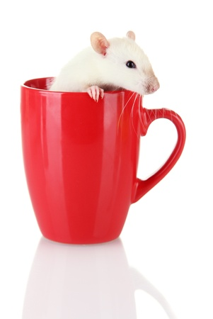 funny little rat in cup, isolated on white Stock Photo - 16738047
