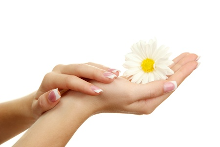 Beautiful woman hands with camomile, isolated on white Stock Photo - 16738045