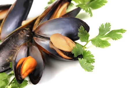 Mussels in shell with fresh herbs isolated on white photo