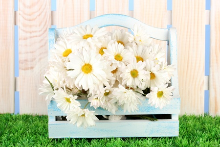 Flowers in wooden box on grass on blue background photo