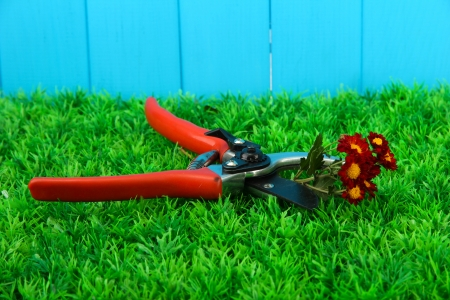 Secateurs with flower on grass on fence background Stock Photo - 16788945