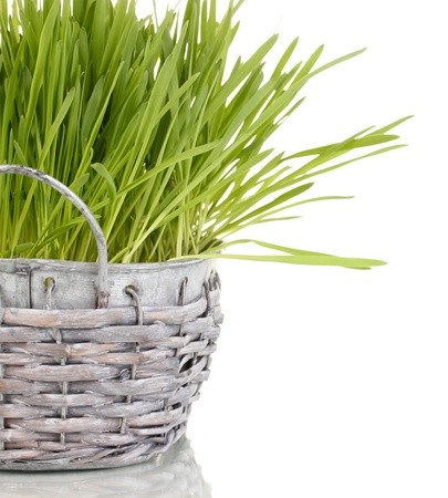 Green grass in basket isolated on white photo