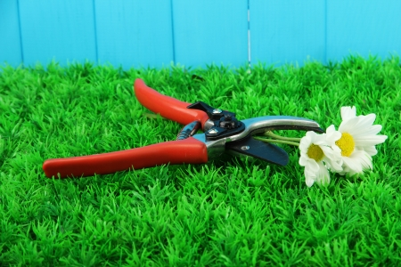 Secateurs with flower on grass on fence background Stock Photo - 16805846