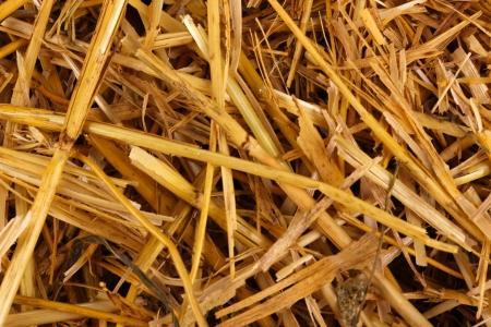 Golden hay close-up photo