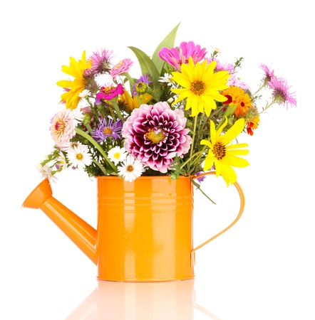 beautiful bouquet of bright flowers in watering can isolated on white photo