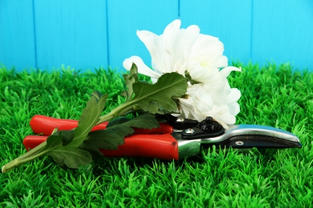 Secateurs with flower on grass on fence background Stock Photo - 16956297