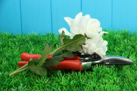 Secateurs with flower on grass on fence background Stock Photo - 16956294