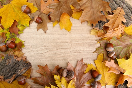 brown acorns on autumn leaves, on wooden background Stock Photo - 17000973
