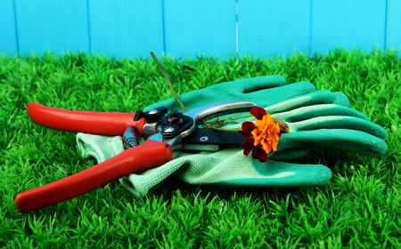 Secateurs with flower on grass on fence background Stock Photo - 17000801
