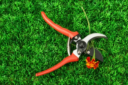 Secateurs with flower on green grass background photo