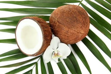 Coconuts with leaves and flower, close up Stock Photo - 17000723