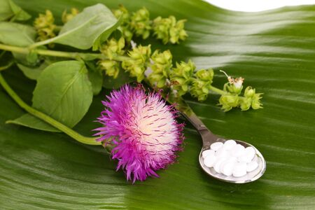 homeopathic tablets and flowers on green leaf isolated on white photo