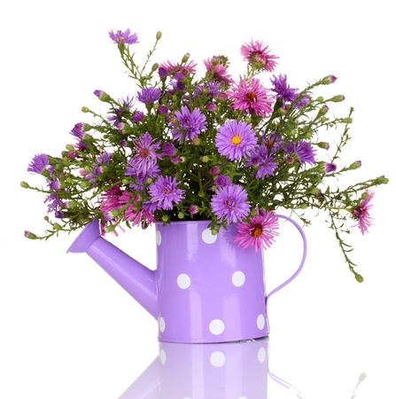 beautiful bouquet of purple flowers in watering can isolated on white photo