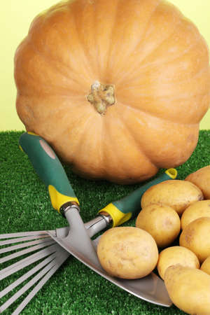 Ripe potatoes with pumpkin on grass on green background close-up Stock Photo - 17054622