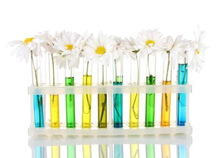 test tube holder: flowers in test tubes isolated on blue background