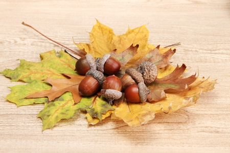 brown acorns on autumn leaves, on wooden background Stock Photo - 17084679