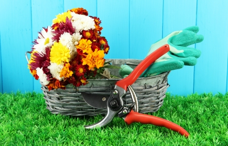 Secateurs with flowers in basket on wooden background Stock Photo - 17111202