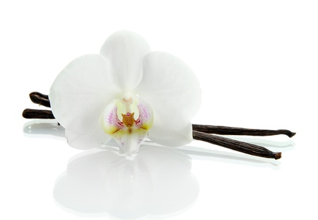 flor de vainilla: Vainas de la vainilla con la flor aislada en blanco