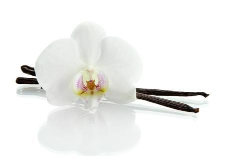 vanilla flower: Vanilla pods with flower isolated on white