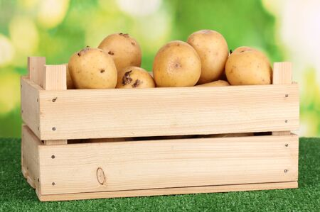 Ripe potatoes in wooden box on grass on natural background photo
