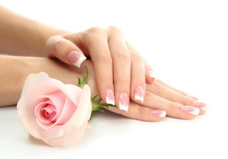 manicura: Manos de hermosa mujer con rosa, aislado en blanco