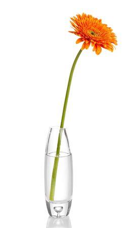 vase: Beautiful gerbera in vase isolated on white