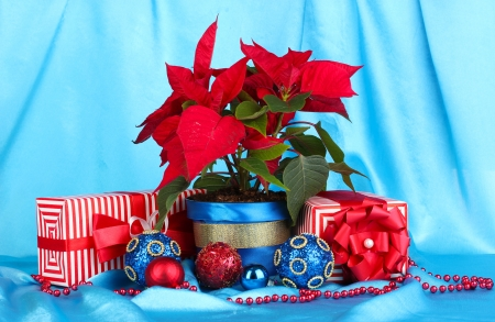 Beautiful poinsettia with christmas balls and presents on blue fabric background photo