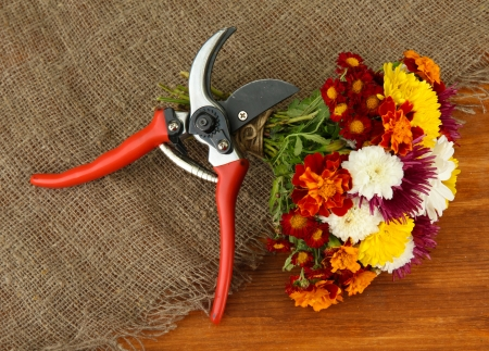 secateurs: Secateurs with flowers on sackcloth on wooden background