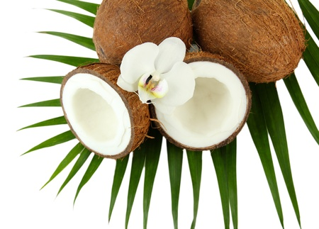 Coconuts with leaves and flower, isolated on white photo