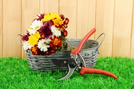 secateurs: Secateurs with flowers in basket on fence background
