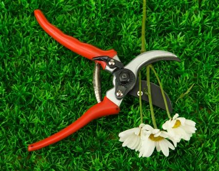 secateurs: Secateurs with flower on green grass background