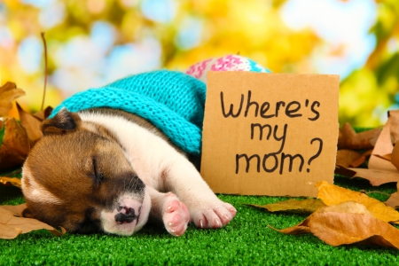 Abandoned little puppy seeking home on green grass on natural backgraund photo