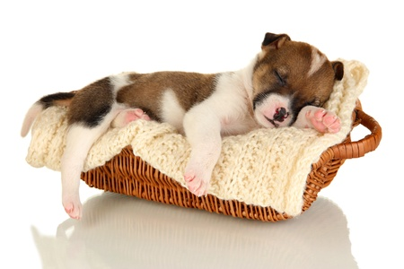 Beautiful little puppy sleeping in basket isolated on white photo