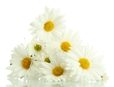 white daisy: bouquet of beautiful daisies flowers, isolated on white
