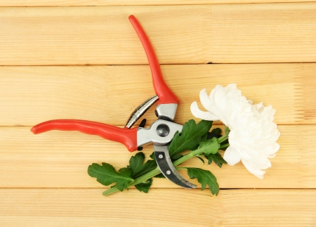 secateurs: Secateurs with flower isolated on white
