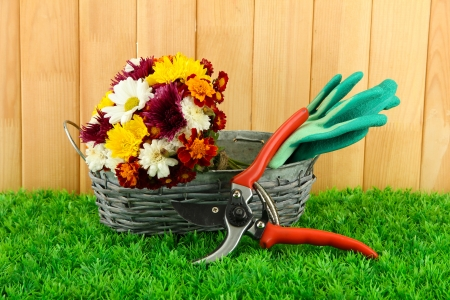 Secateurs with flowers in basket on fence background photo