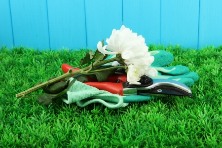 secateurs: Secateurs with flower on grass on fence background