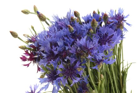 cornflowers isolated on white Stock Photo - 17629029