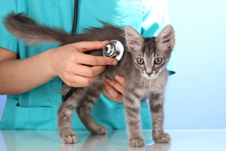 examining: Veterinarian examining a kitten on blue background