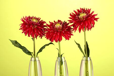 Beautiful red dahlias in vases on yellow  background photo